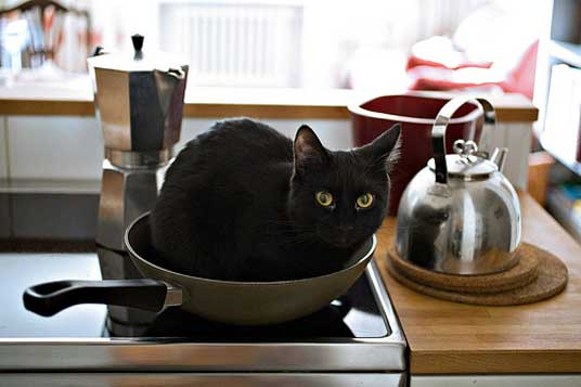 black kitchen trash bags purple rugs washable cat images: cats in kitchens
