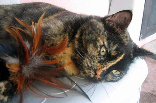 https://i0.wp.com/www.great-pictures-of-cats.com/image-files/tortoiseshell-cat-3.jpg