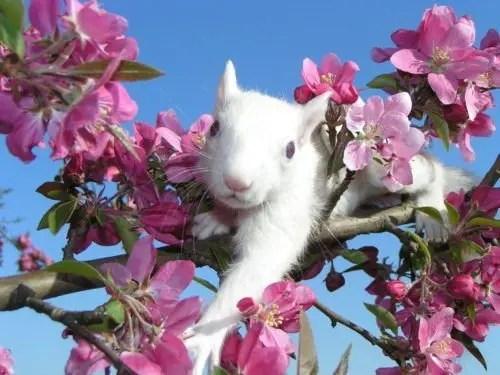 Spring-Squirrel-e1561669497791