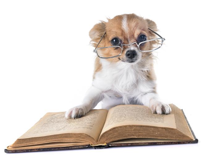 Inheritance Dog
