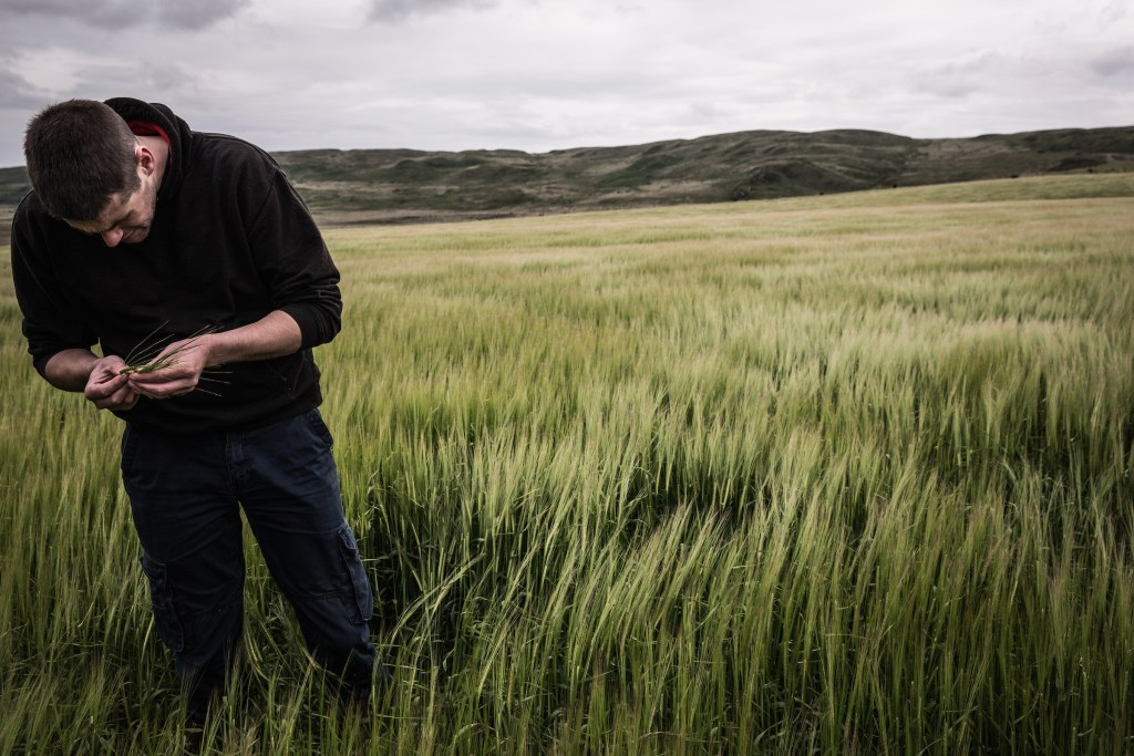 Raymond Fletcher is part of Bruichladdichs Islay barley project