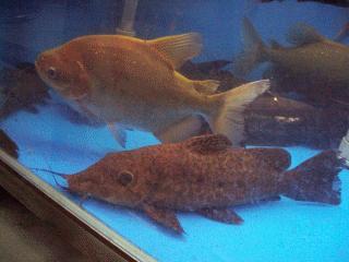 迴龍奇魚園