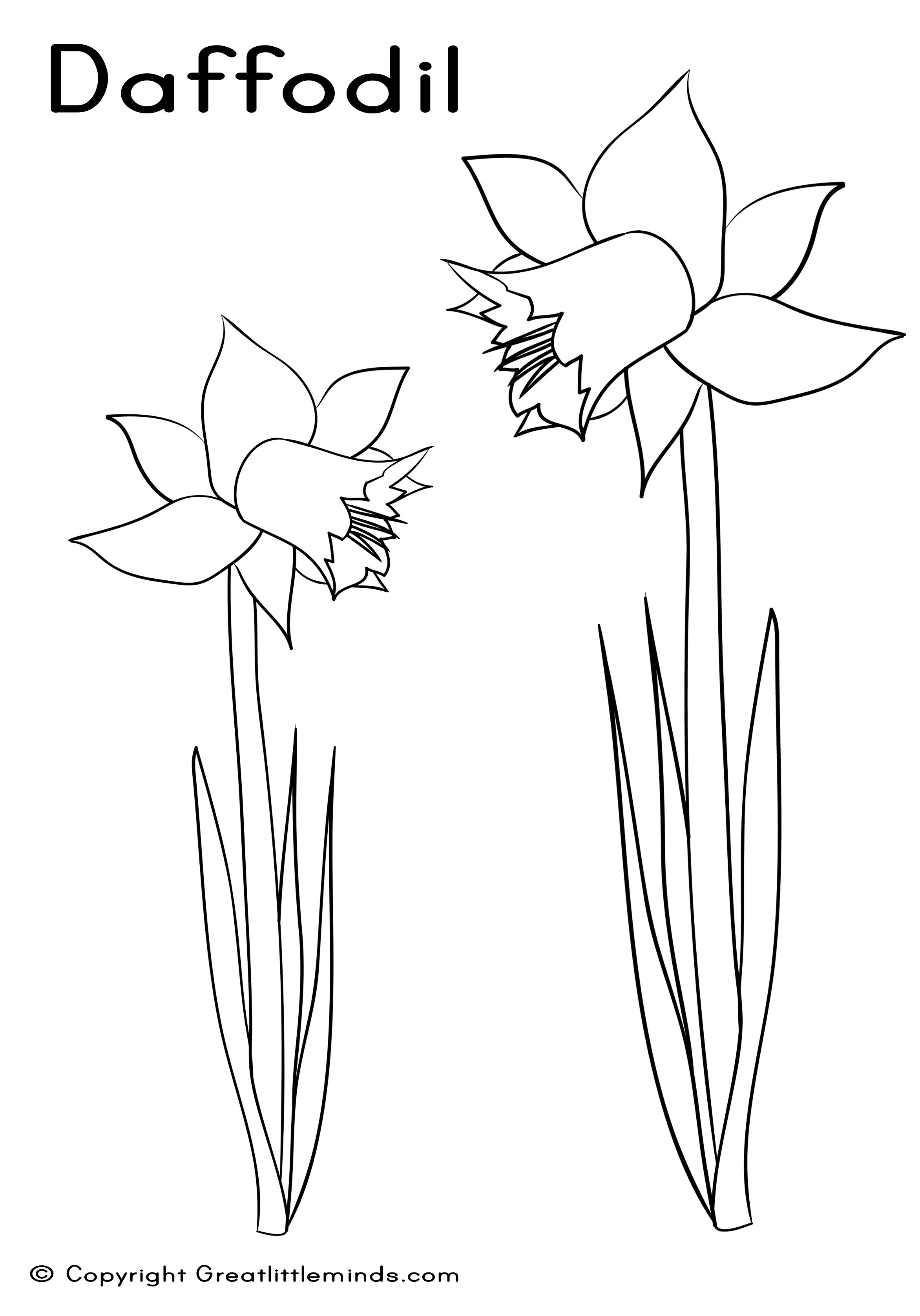 Simple Daffodil Coloring Coloring Pages