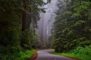redwood-national-park-1587301_1280