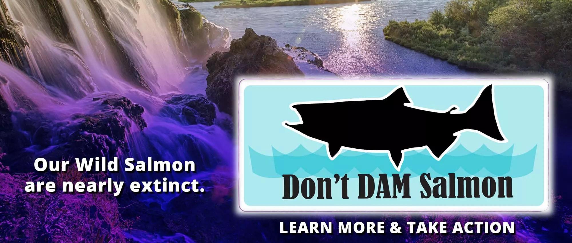 2019Don't Dam Salmon