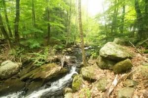 Granite_Broads_Forest-Pic