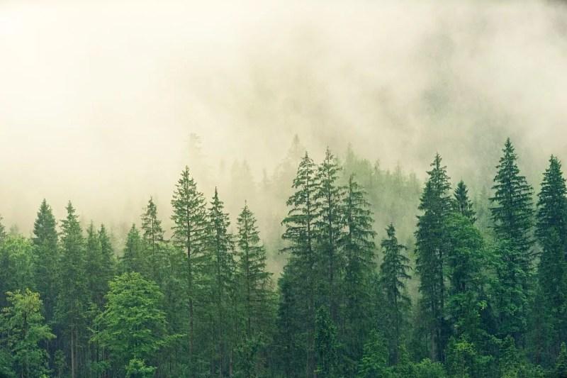 Sept. 28- National Public Lands Day Tree Planting