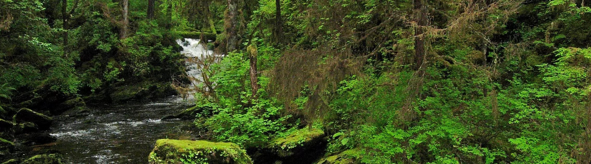 tongass-forest-donate-to-broads