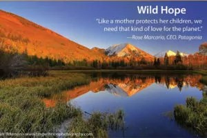 Wild Hope Film Poster