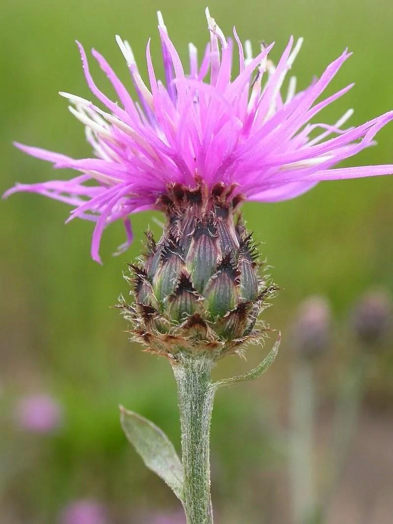 May 3 ~ Invasive species/Noxious Weeds & You
