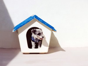 A dog in his little house