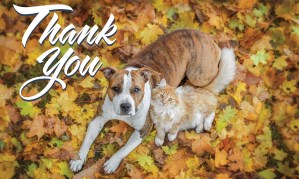 Thank you from Great Plains SPCA