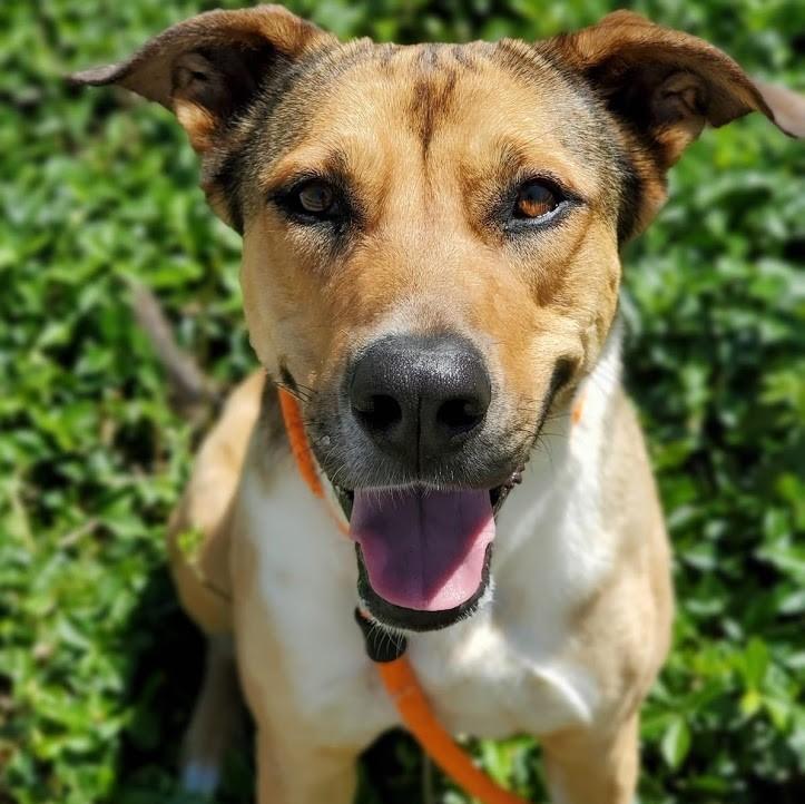Pups For Parole - Becca