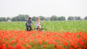 Couple cycling amidst red flowers