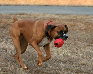 02_Molly_Caught_that_Kong!
