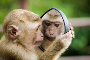 A monkey asking mirror, mirror on the wall, what is real?
