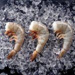 U10 Colossal Shrimp