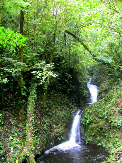 Waterfall, Monteverde, Santa Elena, Costa Rica