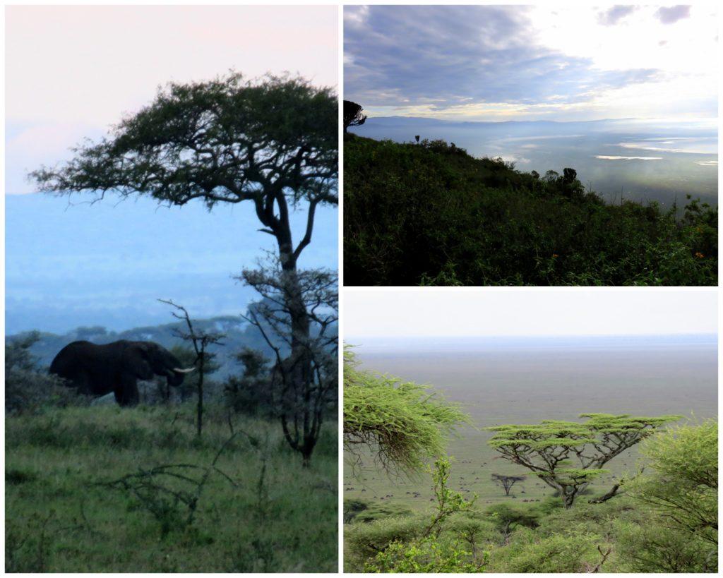 ngorongoro crater, serengeti, tanzania, safari