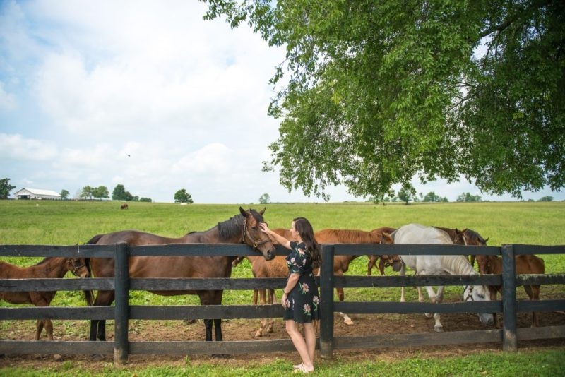 kentucky, horses, lexington
