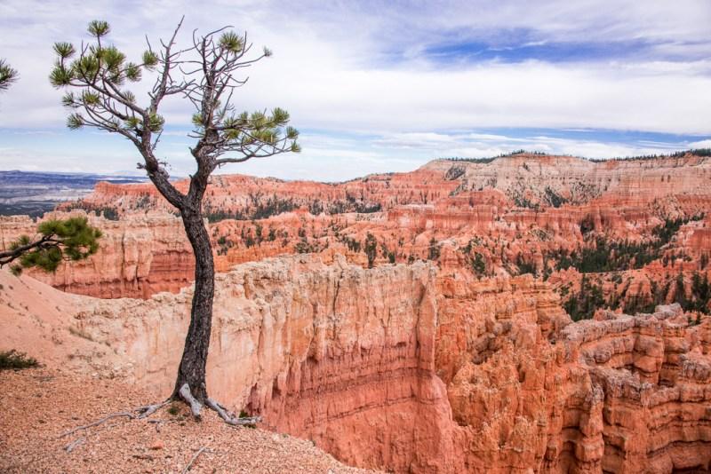 Bryce Canyon- Hoodoos in Utah