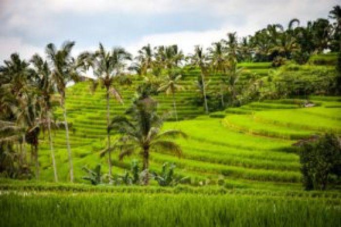 Tegalang, Jatiluwih, Rice Terraces, Bali, Indonesia