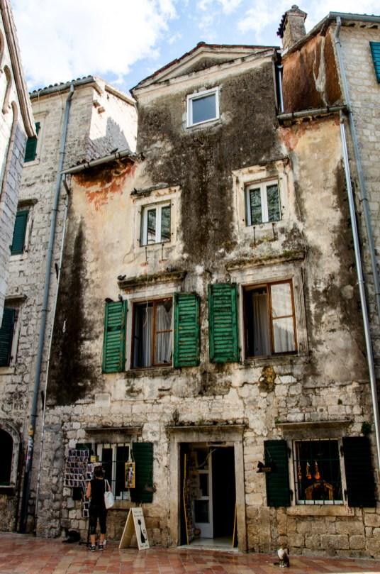 Town of Kotor, Montenegro, Cats Kotor
