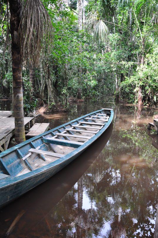 Tambopata Jungle Peru