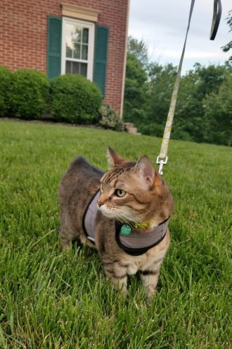 Cat Leash and Harness