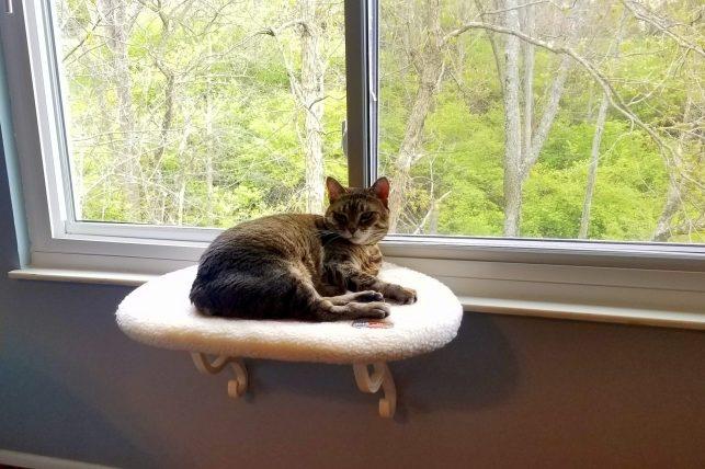 sunny seat