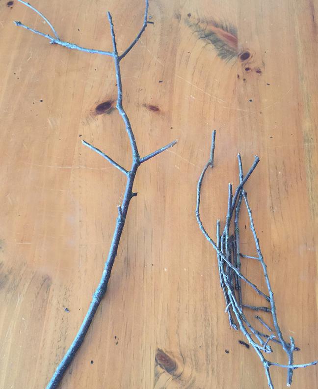 pompom buds_twigs