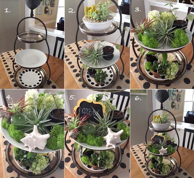 plants-steps