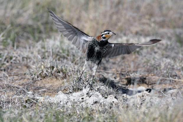 Shotgun shells litter the ground as a sign in the Pawnee National Grassland shows the destruction that vandals have done. Shooting in the grassland have become a concern due to the damage created and the possible effect on the wildlife.