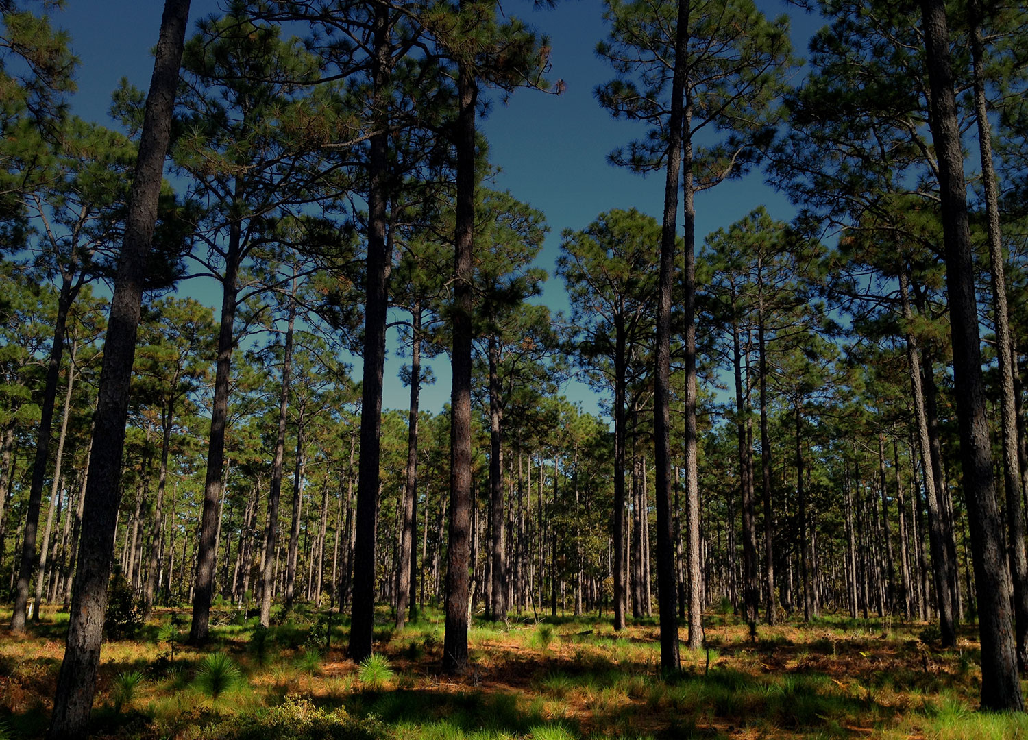 Forest Carbon Offset Development