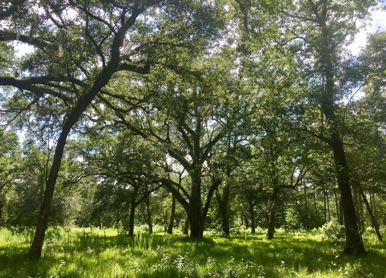Habitat Restoration & Biodiversity Consultation