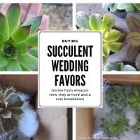 Buying Succulent Wedding Favors Online | Review