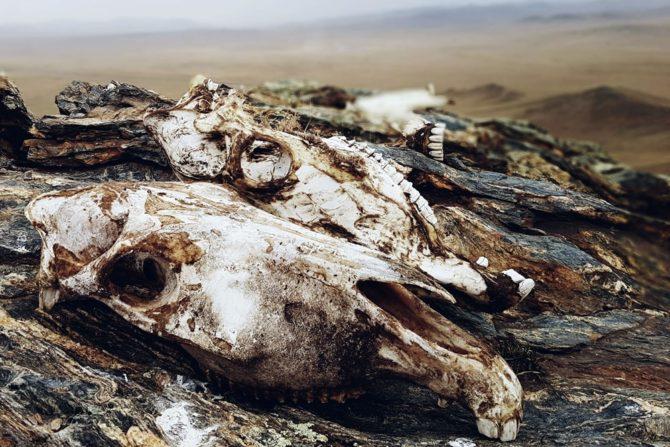 czaszki zwierzat porozumienie dla przyrody