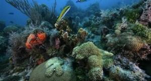 oxigen ocean