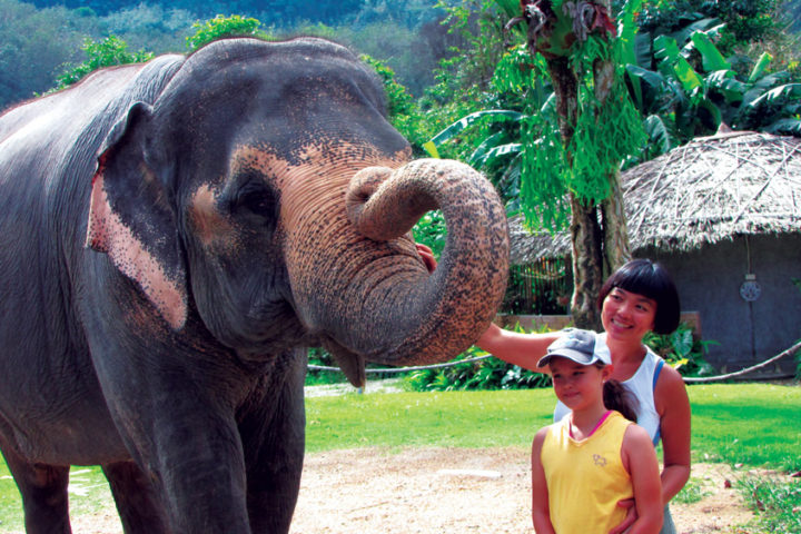 Meet elephants on our Khao Sok tour