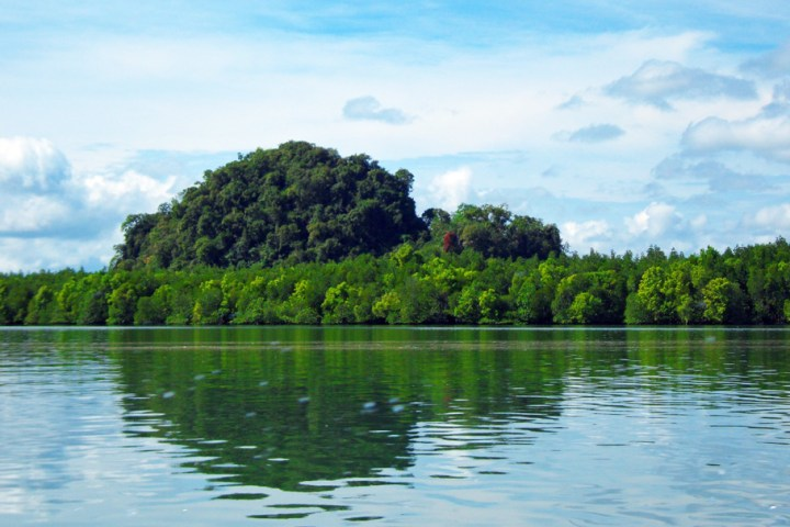 mangroves in phang nga bay