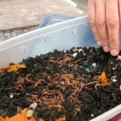Compost Bin For Kitchen Washable Rugs Target Worm Composting 101: All You Need To Know About This ...