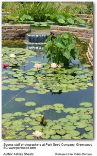 Inviting Wildlife to Your Garden: Build a Pond