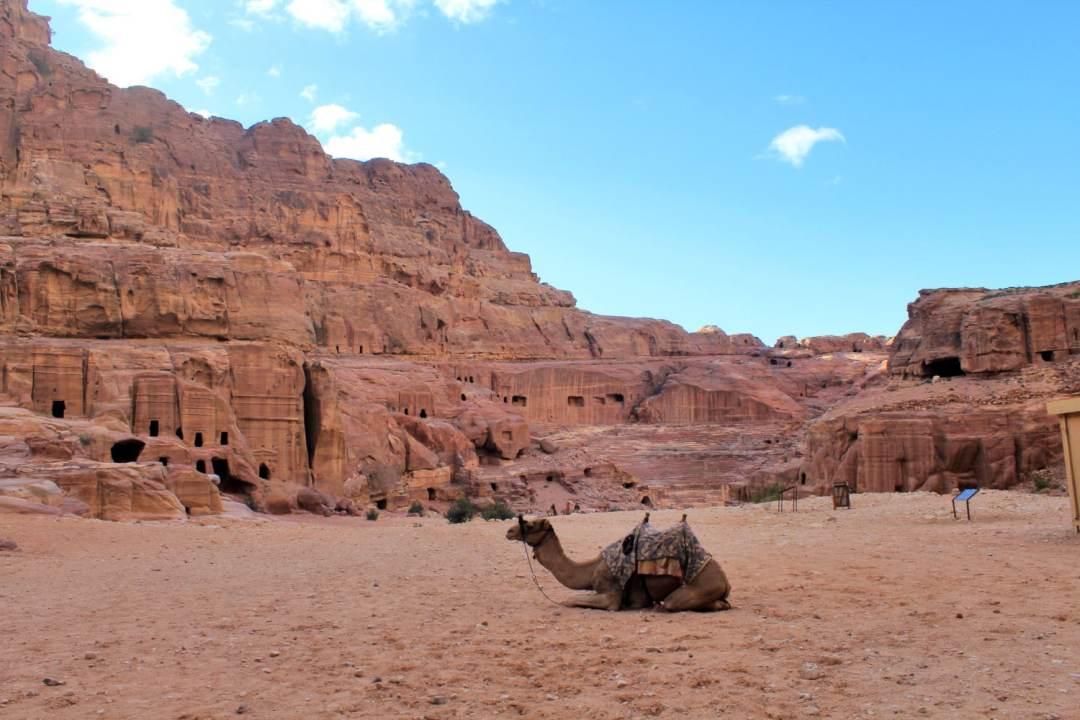 Petra Lost City Camel