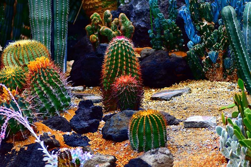 25 Beautiful Cactus Garden Ideas Green And Vibrant