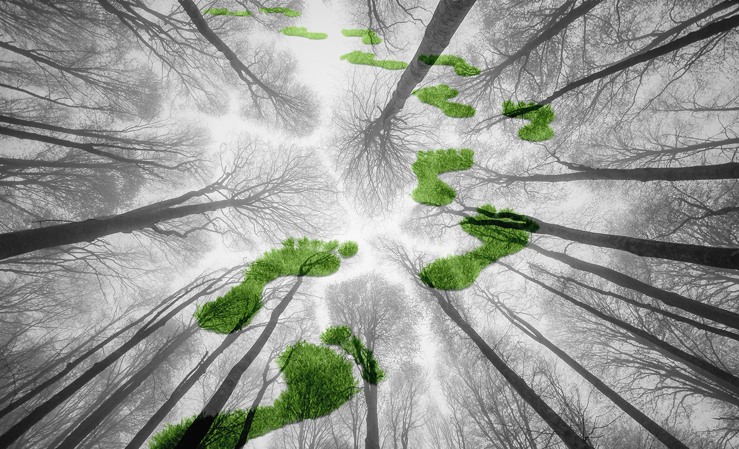 This pattern follows one of the most common deforestation trajectories. How Forest Carbon Can Provide Roi For Your Sustainable Business Strategy Greenbiz