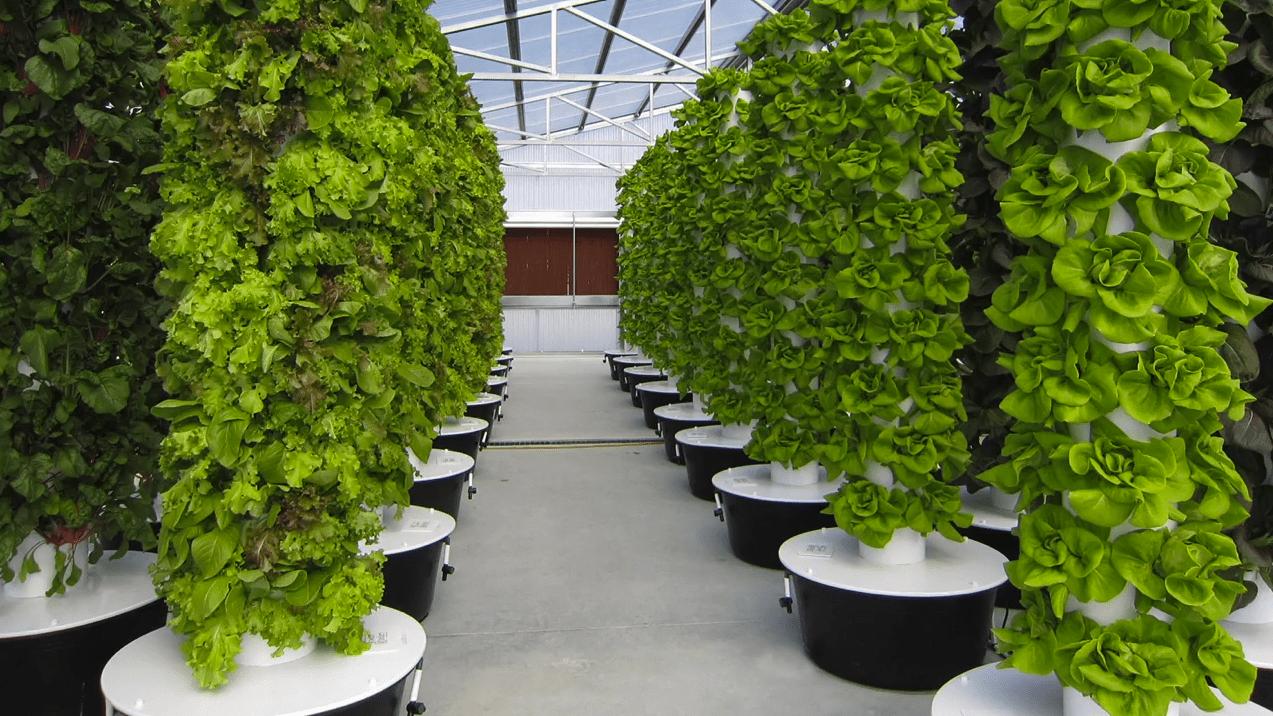 Green Bronx Machine Stephen Ritz urban farming