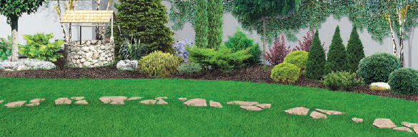 lawn and stone path