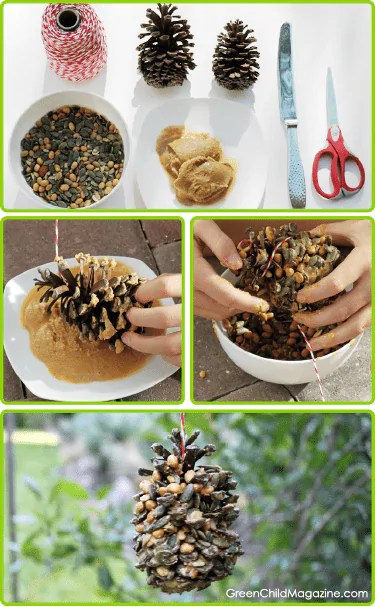 Semi sowandcrop for Pianta noccioline