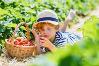 Kid-Friendly Garden Projects to Try this Spring or Summer