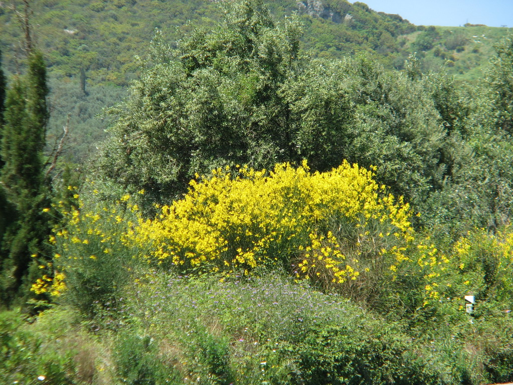 Corfu meadow in spring